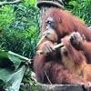 【子連れ家族旅行】GWにシンガポール動物園に行ってきました