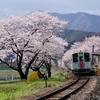 桜満開の樽見鉄道木知原駅