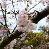 浪人が決まったら、春休みのうちにこの5個は必ずやっておこう!(3月・4月)
