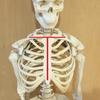 【ダンス上達のコツ】キレイなホールドは、鎖骨と胸骨のTがポイント!