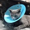 猫ちゃま、去勢手術終わりました
