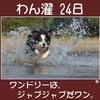 2017.12月号 小話「婚姻ランドリーというコインランドリー物語 第15話」 + わん濯(わんたく)24日