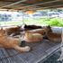 7台のGoPro Hero 4で撮った4Kの猫島360°動画