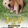 DVD / きな子~見習い警察犬の物語~