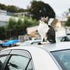 MFで猫の目にピント合わせは難しい