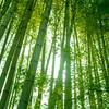 竹と霊的な存在