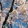 【フィルムカメラ】YOKOHAMA写真散歩その2【OLYMPUS L-10 panorama】【FUJI記録用400】