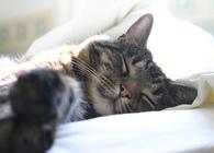 """やっぱり猫が好き! 猫の写真や動画をパソコン&スマホの画面越しに""""モフモフ""""しよう"""
