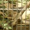 井の頭自然文化園 鳥