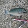楽しい釣り♪ 2020秋第七回目の紀州釣り