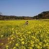 《キャンピングカーくるま旅》花咲く春の総州へ 人気を避けた千葉の旅 Day2