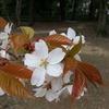 加太砲台跡の展望広場の桜