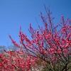 今頃、大阪城の梅は綺麗だろうな!