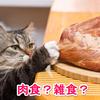 猫は雑食?肉食?どっちなのでしょうか?