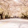 Snapshot ~『桜 2021』 #11