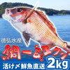 「もしもツアーズ」で紹介!愛媛県・宇和島産のブランド鯛『鯛一郎クン』