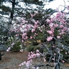 総社市矢喰神社の桜