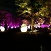 『福岡城 チームラボ 城跡の光の祭』に行ってきました