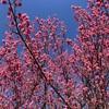 港北ニュータウンで春を感じる(21年2月)