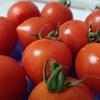 真っ赤なトマトが届く。