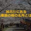 兵庫県の桜スポットでお花見①