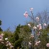 桜など・・・。