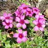 春の花に癒される