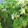 4月の庭 その1「1月からの庭の手入れ 雑草以外編」