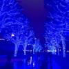 東京渋谷のイルミネーション「青の洞窟」にいってきました
