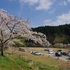 3年ぶりの家山の桜 ~昼食を食べてのんびりスタート~