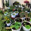 夏の庭づくりをスタート