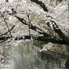 お花見ランニング〜大盛況の井の頭公園のボート〜