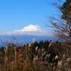 晩秋の西丹沢で富士山遠望
