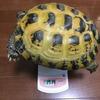 ホルスちゃん、体重測定。11月18日