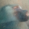 ハワイ ホノルル動物園で会える個性的な動物たち
