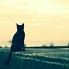 放置された『猫カフェ』の猫さんたち・・・。