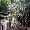 アンコールワット個人ツアー(179)ベンメリア遺跡とコーケー遺跡と胡椒畑観光ツアー