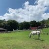 小須田牧場