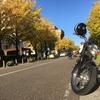 日本大通りの秋