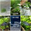 タナゴの1年間の成長過程を紹介!稚魚の餌や注意点も(セボシタビラ編)