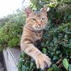 9月前半の #ねこ #cat #猫 その1