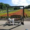 犬と楽しめるたんばらラベンダーパーク