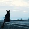 やぎろぐが無くなった?それよりも私が好きだった、黒猫がはてな村を去りました。