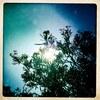Turquoise Oleander #01