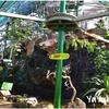ケアンズ市内の動物園『ワイルドライフドーム』でトカゲや小ワニにタッチ