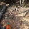 ほだ木サイズ回収編 トラブル発生 Recovering the Hoda-wood sized trees