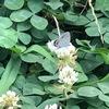 EMらくちん農園に蝶々も喜んでいる。