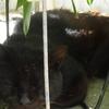 暑い猫と・・!
