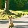 昨日は狐4回、リス3回みました。