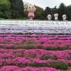 姫路 ヤマサ蒲鉾「夢鮮館」芝桜の小道